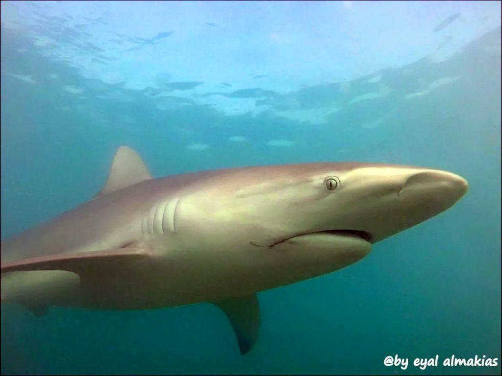 כרישים בחדרה - אייל אלמקייס