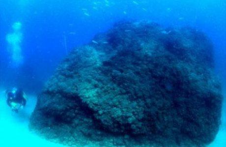 אתר צלילה ארכיאולוגי תת ימי – מסלול ד